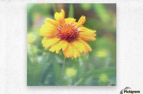 Morning Beauty  Metal print