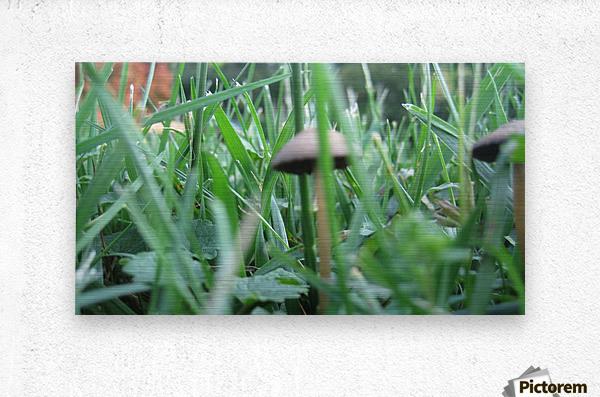 Mushroom 3  Metal print