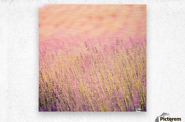 Sunset lavender flowers, instagram effect  Metal print