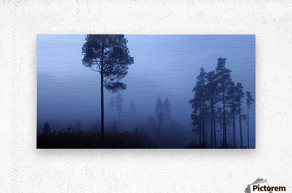 Early Morning Mist  Metal print