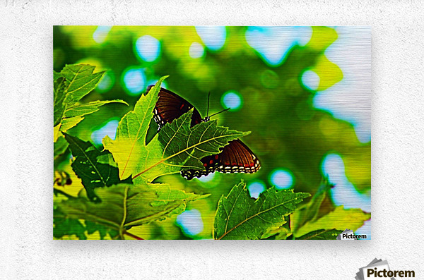 Resting on A Maple Leaf  Metal print