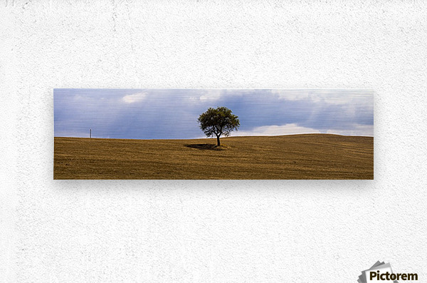 Tuscany Tree  Metal print