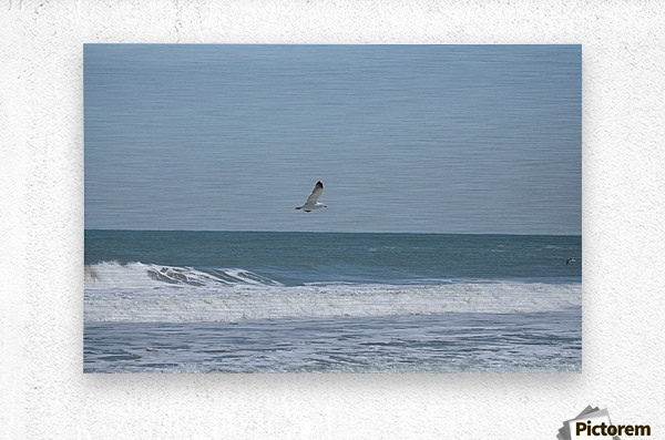 Seagull flying over waves  Metal print