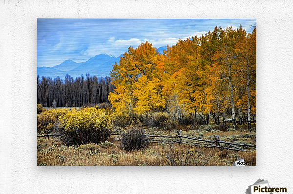 Fall Holdouts in Jackson Hole  Metal print