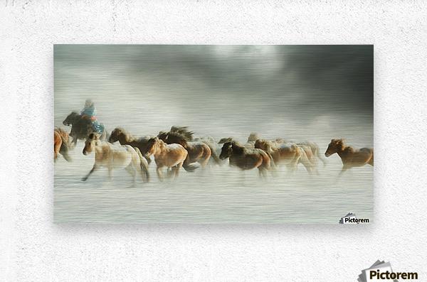 Horses gallop  Metal print