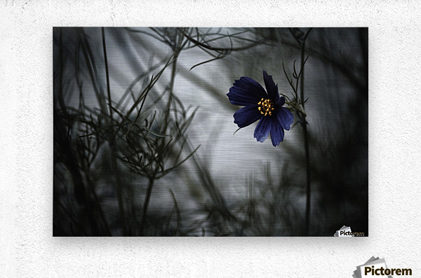 When Cosmos will be blue  Metal print