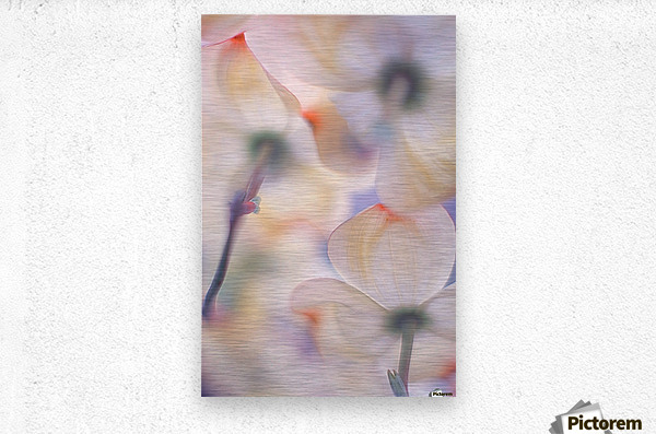 Under the skirts of flowers  Metal print