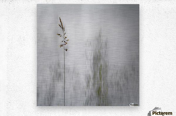 blade of grass  Metal print