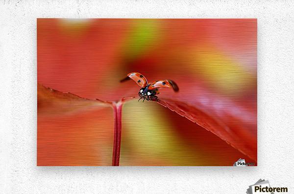 Ladybird in autumn  Metal print