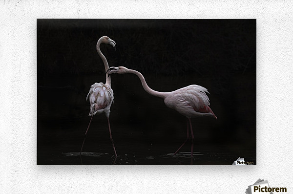 Not all is rosy  Metal print
