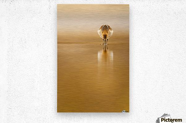 Dunlin reflection  Metal print