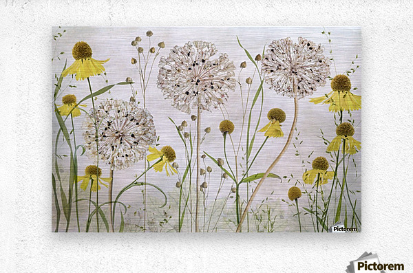 Alliums and heleniums  Metal print