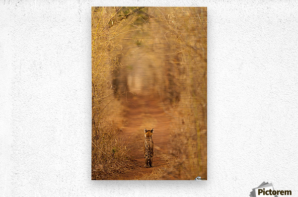 The Tiger in  the Tunnel  Metal print