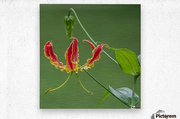 Flame Flower   Metal print