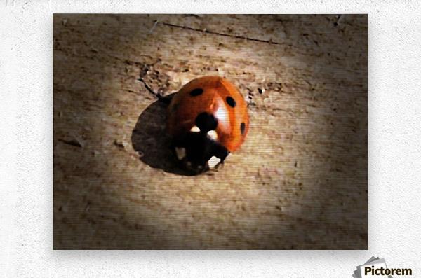 Lady Bird Bug  Metal print