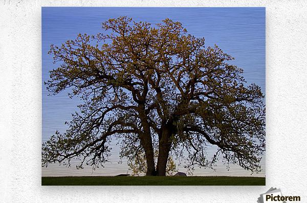 The Wishing Tree  Metal print