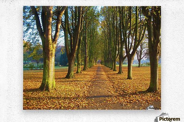 Autumnal Avenue  Metal print