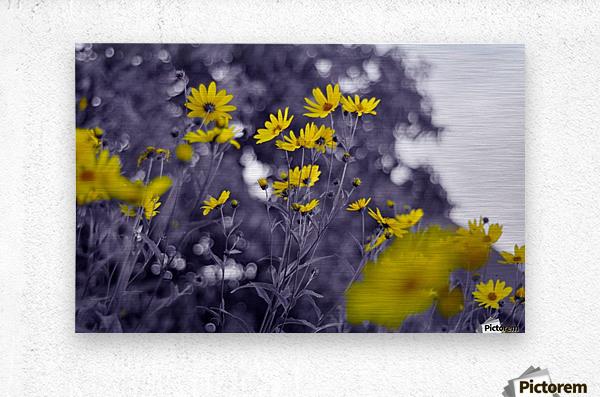 Still yellow  Metal print
