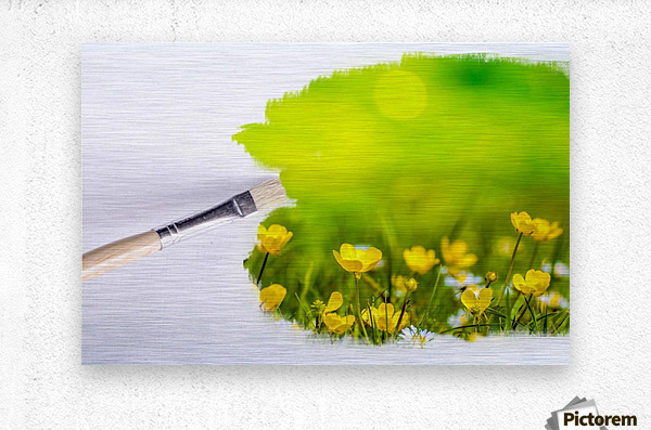 Paintbrush Outdoor Flower Flowers Sunlight  Metal print