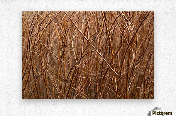 Abstract Background Branch Brown Color Flora  Metal print