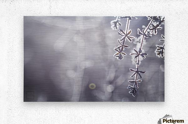 --  Metal print