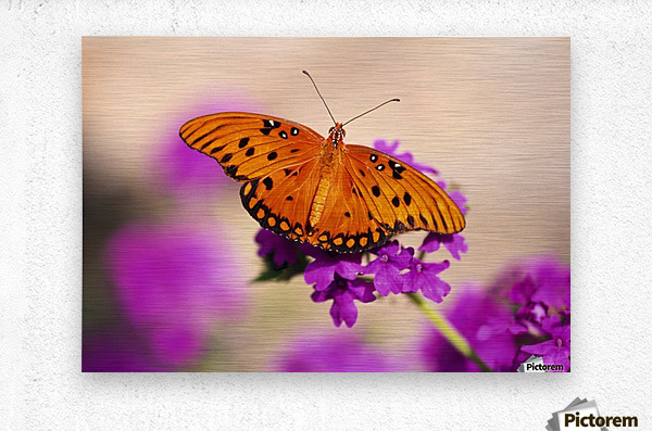 Orange Butterfly  Metal print