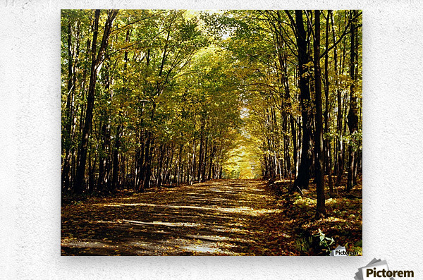 Tree Lined Road In Autumn  Metal print