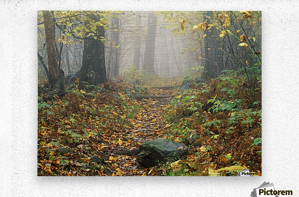 Shenandoah National Park In Virginia  Metal print