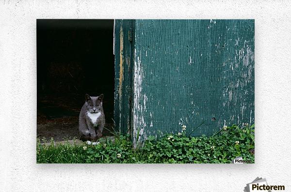 Cat In A Doorway  Metal print