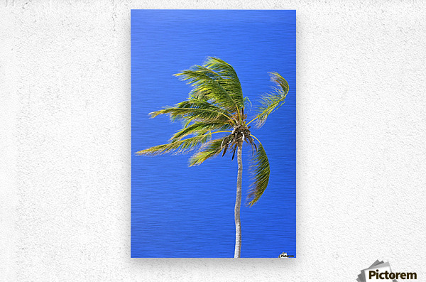 Palm Tree Against Clear Blue Sky  Metal print