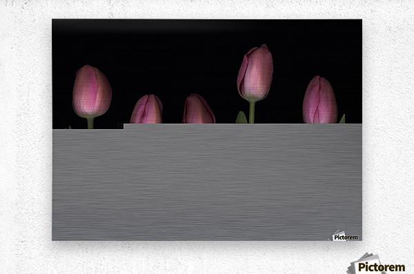 Pink Tulips  Metal print
