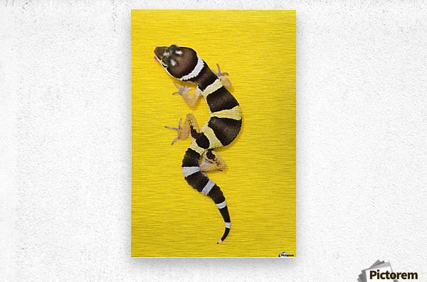Baby Leopard Gecko On Yellow  Metal print