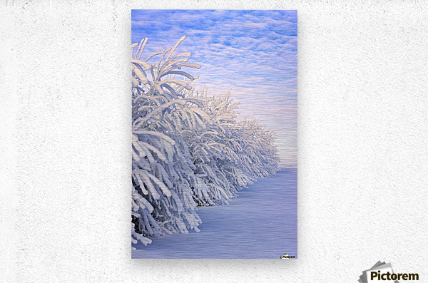 Covered In Snow  Metal print