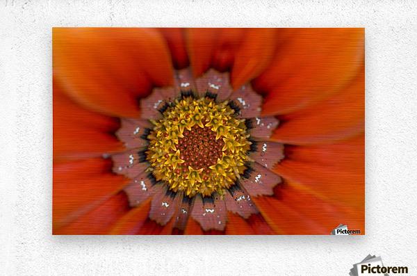Lake Of The Woods, Ontario, Canada; Colourful Flowers In Bloom  Metal print