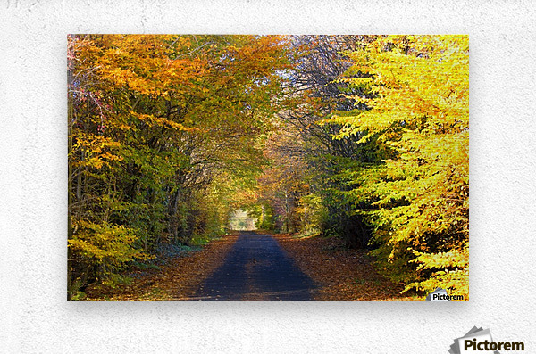 Rural Road, Argyll And Bute, Scotland  Metal print