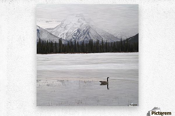 Winter Landscape, Banff National Park, Alberta, Canada  Metal print