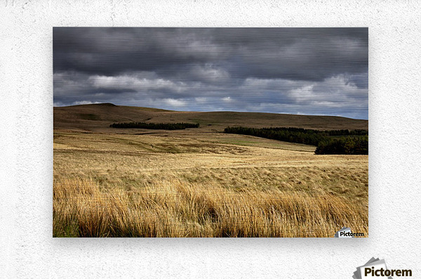Field Of Wheat With Dark Clouds Overhead, Northumberland, England  Metal print