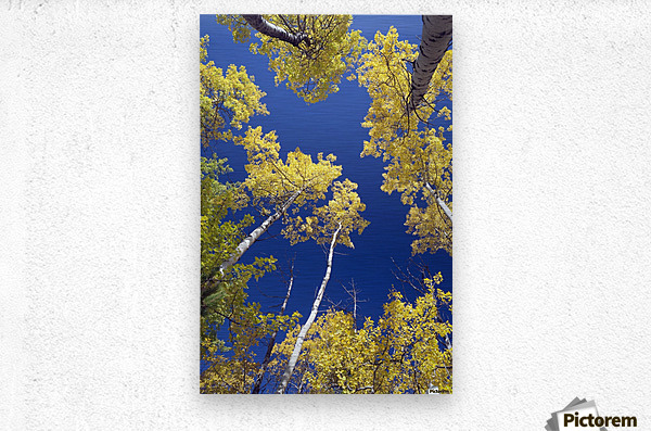 Forest During Autumn, Kananaskis, Alberta, Canada  Metal print