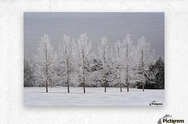 Winter, Calgary, Alberta, Canada  Metal print