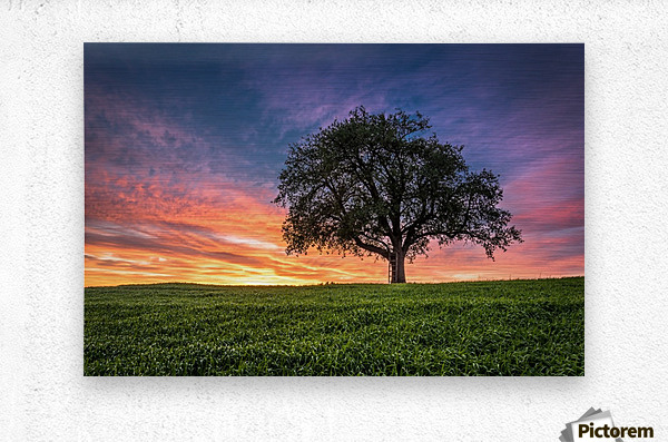 Lonely Tree at Sunset  Metal print