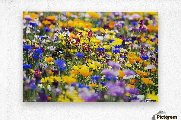 Wildflowers, Mount Hood, Oregon, Usa  Metal print