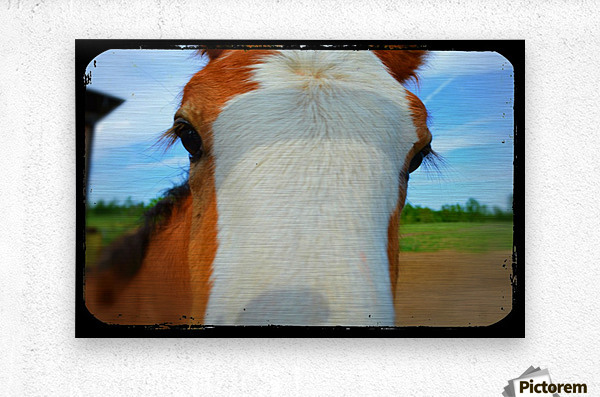 Baby Clydesdale  Metal print
