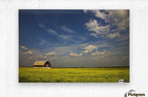 Alberta, Canada; An Old Barn In A Field  Metal print