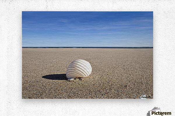 Northumberland, England; A Seashell On The Sand On Low Newton Beach  Metal print