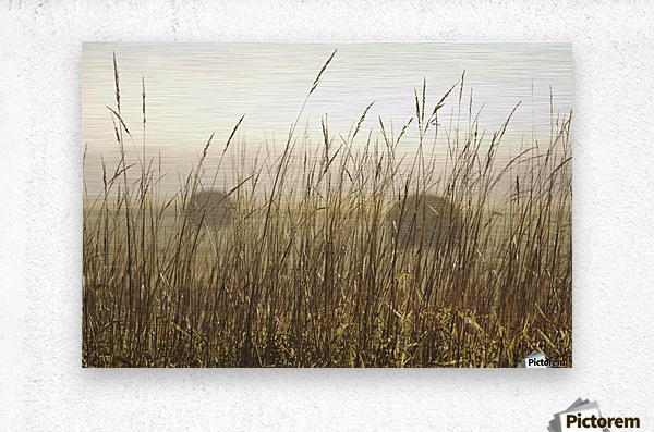 Bales Of Hay In A Field In The Fog; Thunder Bay, Ontario, Canada  Metal print
