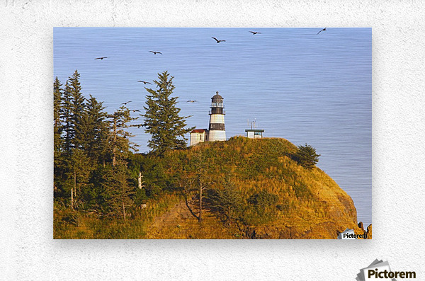 Birds In Flight Over Cape Disappointment Lighthouse; Ilwaco, Washington, United States of America  Metal print