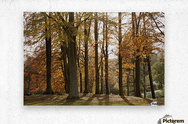 Trees In Autumn Colours Casting A Shadow On The Ground; Northumberland, England  Metal print