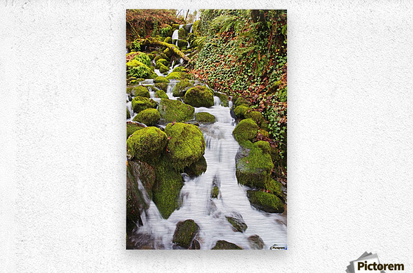Green moss along small waterfall;Happy valley oregon united states of america  Metal print