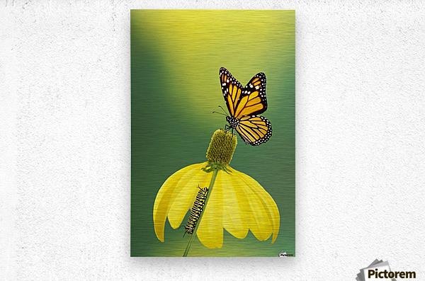 Caterpillar to butterfly;British columbia canada  Metal print