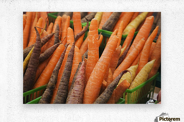Green plastic baskets with freshly picked organic carrots (Daucus carota) for sale at an outdoor market, Byward Market; Ottawa, Ontario, Canada  Metal print